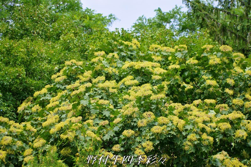 s-K70-20200815-harigiri-0.jpg