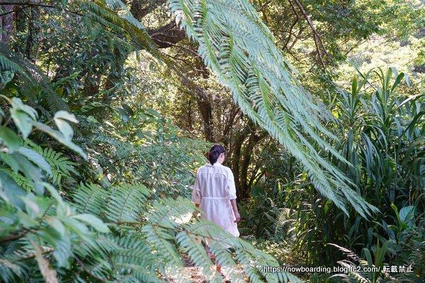 沖縄 亜熱帯の森