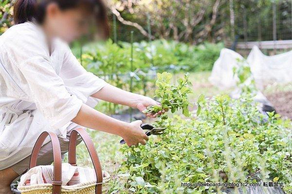 沖縄 無農薬野菜 収穫