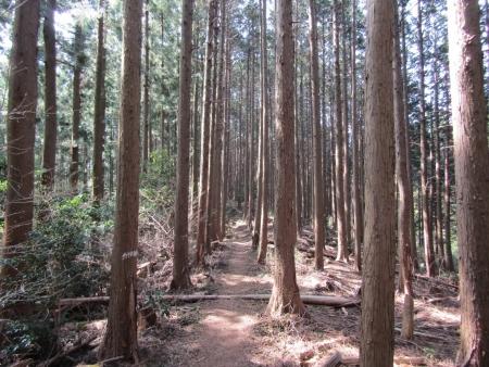 200322都幾山~金嶽 (7)s