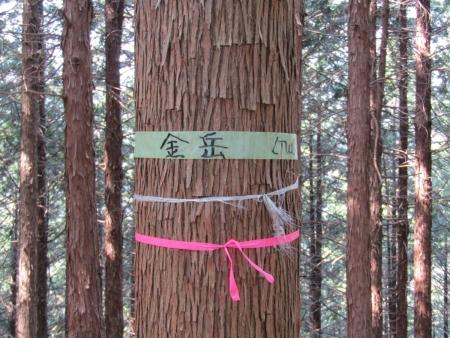 200322都幾山~金嶽 (9)s