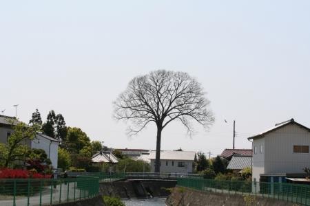 200429滝川下流 (8)s