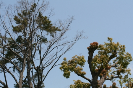 200429滝川下流 (13)s