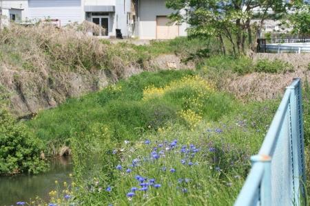 200505染谷川下流 (8)s