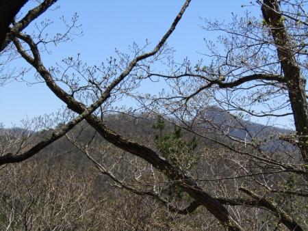 200508_03丸山 (9)穴山s