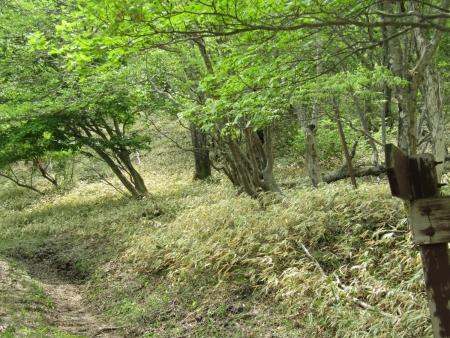200603荒山~鍋割山~前浅間 (62)s