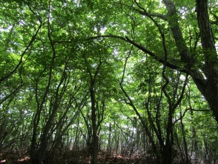 200616浅間隠山と周辺 (5)安高山s