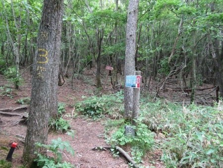 200616浅間隠山と周辺 (37)s
