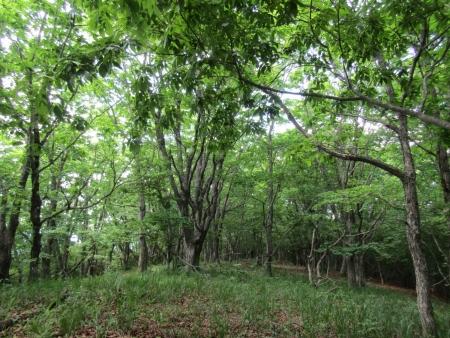 200616浅間隠山と周辺 (40)岩淵山s