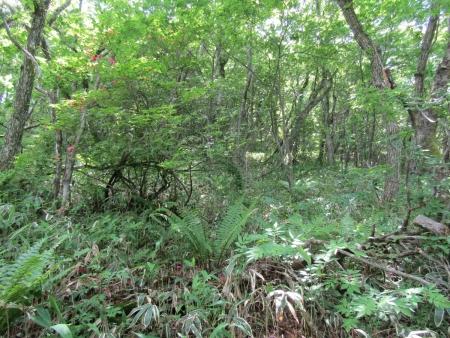 200616浅間隠山と周辺 (43)s