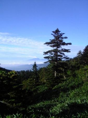 040827天狗原分岐上から浅間山