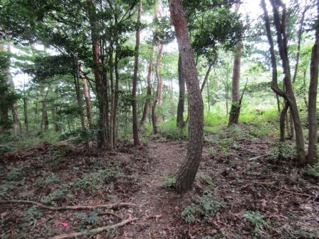 200801太田金山 (12)北八王子山s