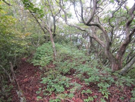 200921稲含山・黒内山 (9)s