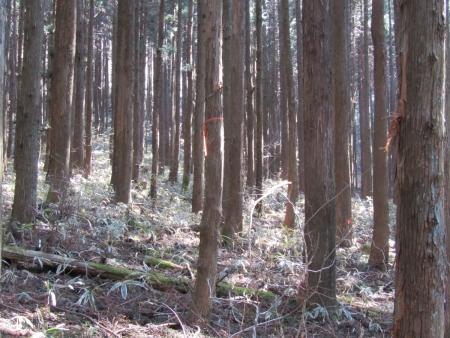 210411鷹ノ巣山 (10)s