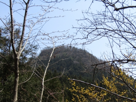 210411鷹ノ巣山 (23)鷹ノ巣山s