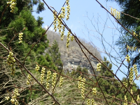 210411鷹ノ巣山 (34)黒岩s