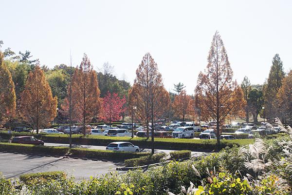 牧野が池駐車場紅葉