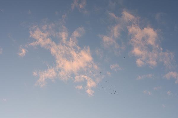 鳥の群れと雲