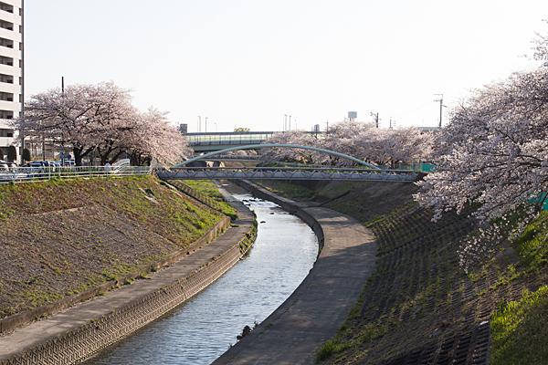 香流川桜7