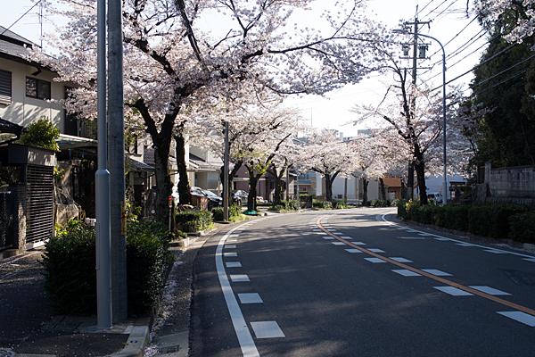 大森寺南桜