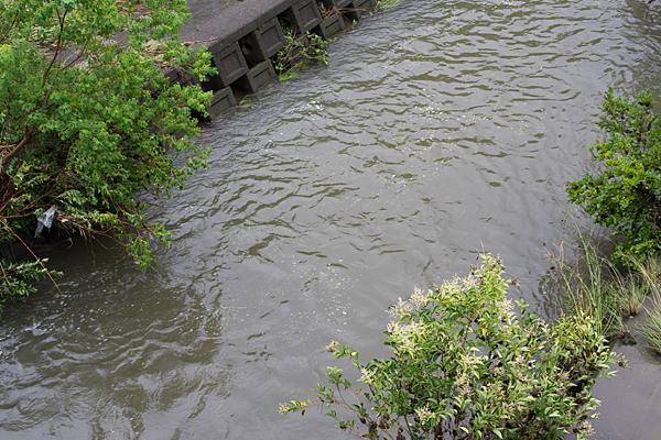 香流川増水