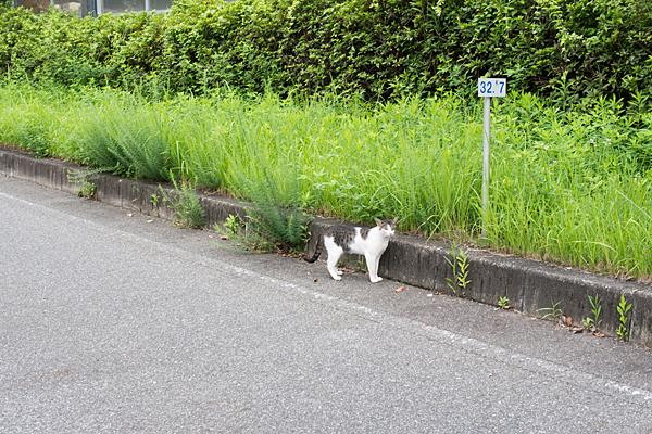 道ばたの野良猫