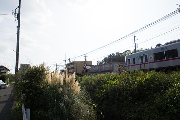 名鉄瀬戸線とパンパスグラス