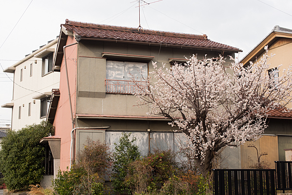 空き家の梅