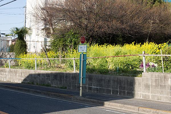 菜の花とバス停