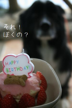 Orion7歳誕生日