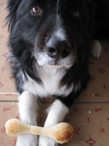 サフランの犬パン