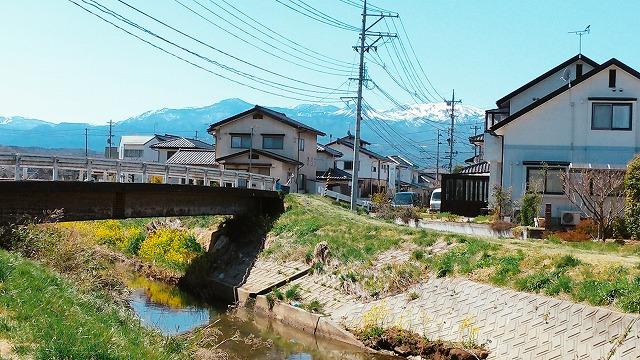 2004sakura005.jpg