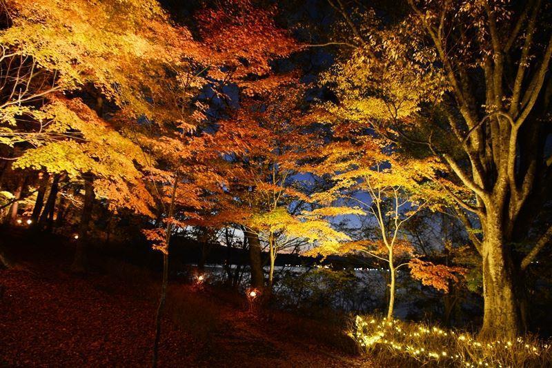 山中湖ライトアップ (8)