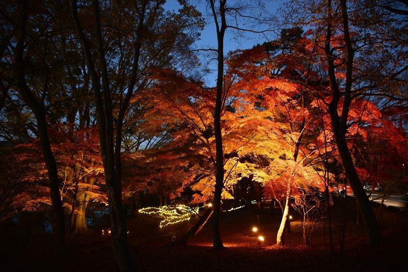 山中湖ライトアップ (9)