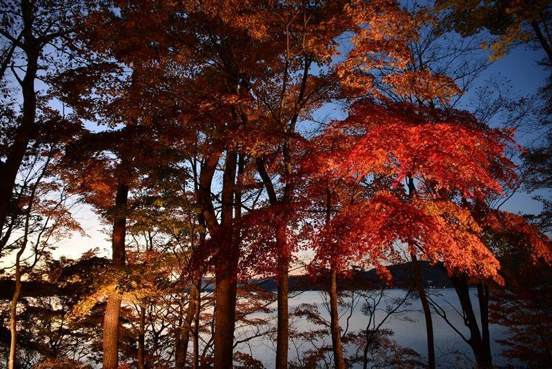 山中湖ライトアップ (11)