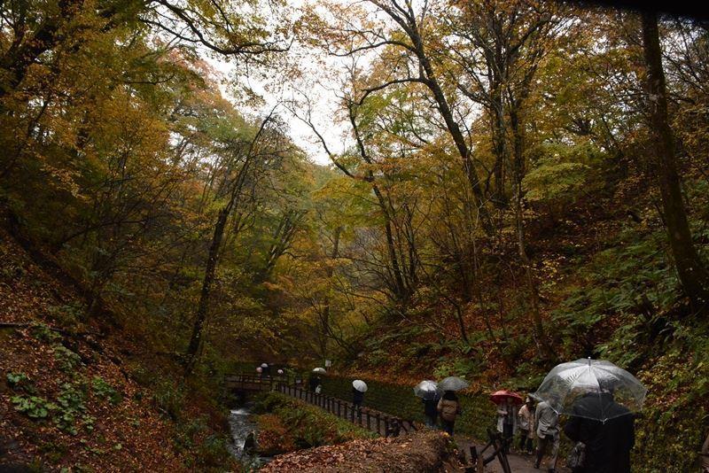 白糸の滝~w (5)