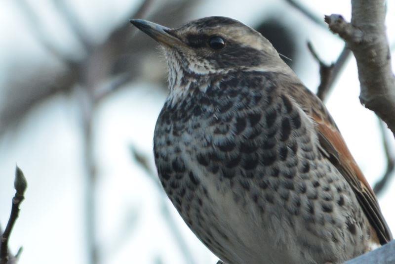bird~y (6)