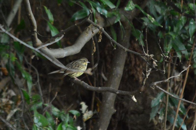 bird~y (4)