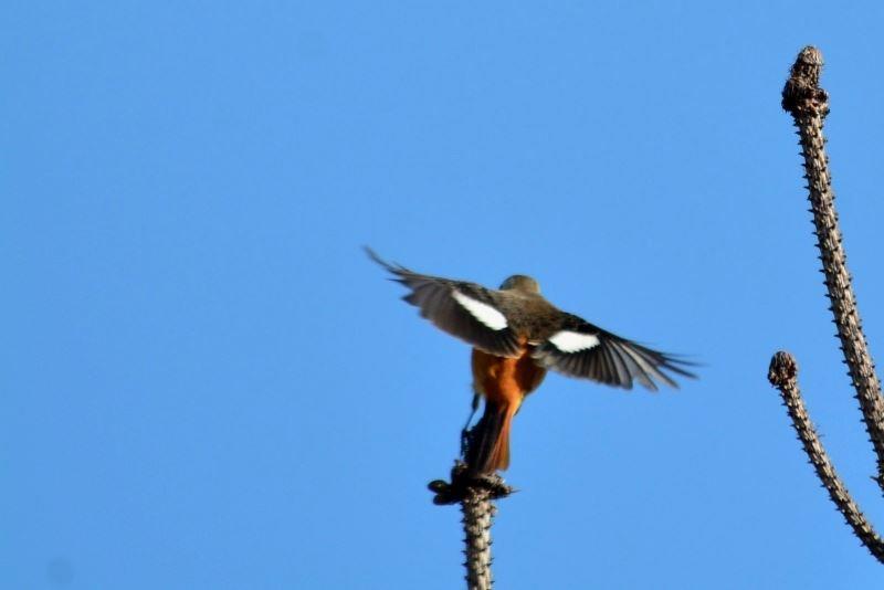 bird~12 (3)