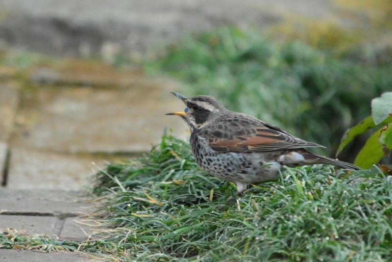 bird~y (10)