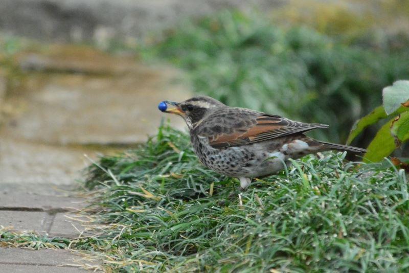 bird~y (9)