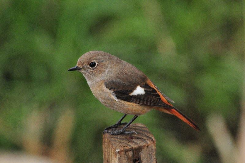 bird~s (5)