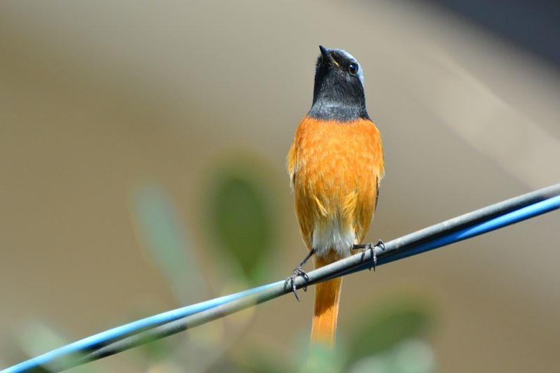 bird~s (4)