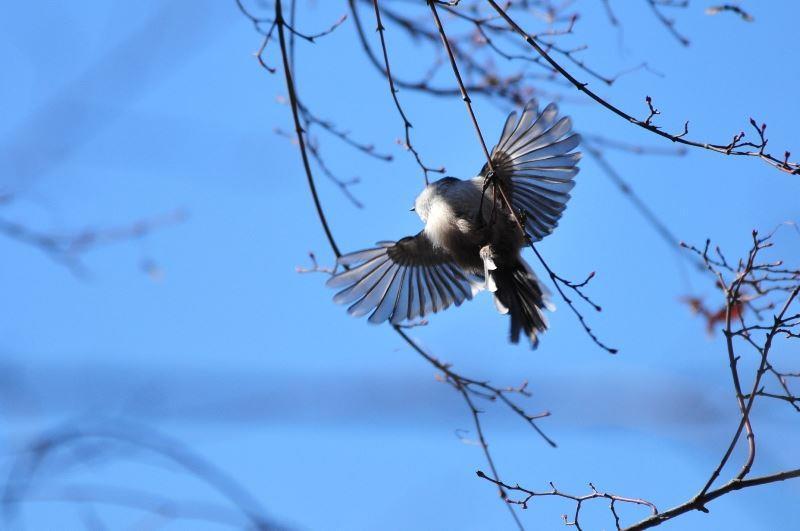bird~c (3)