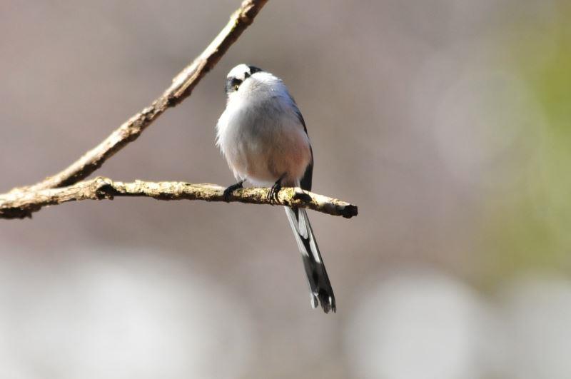 bird~c (4)