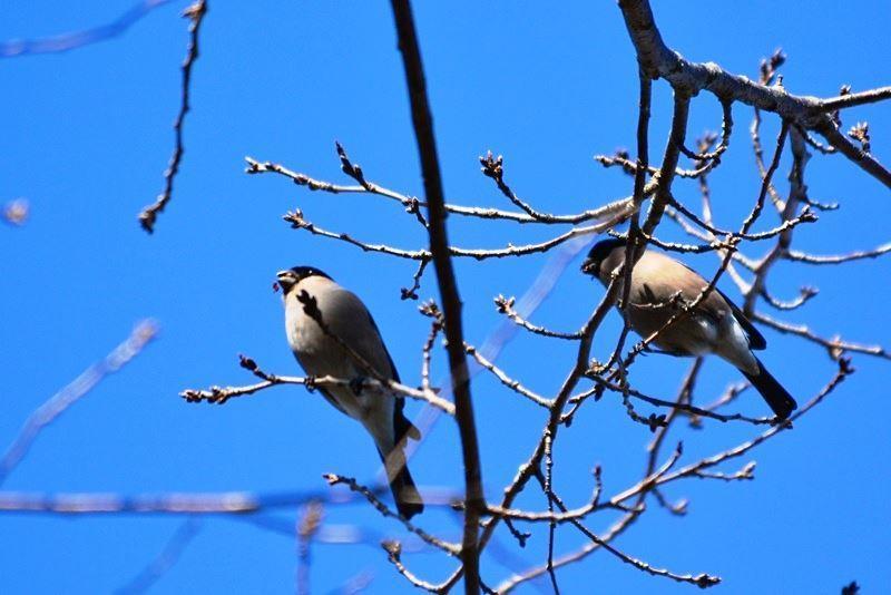 bird~c (1)
