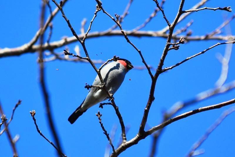 bird~b (4)
