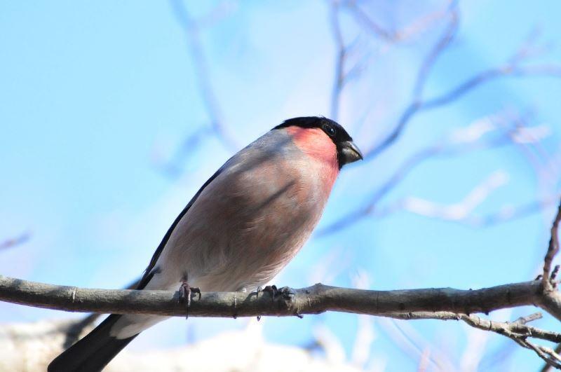 bird~b (5)