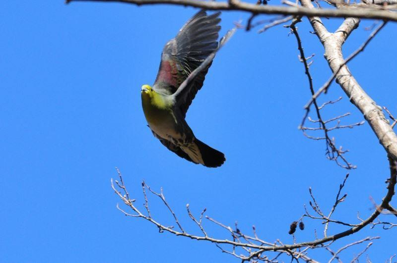 bird~b (7)