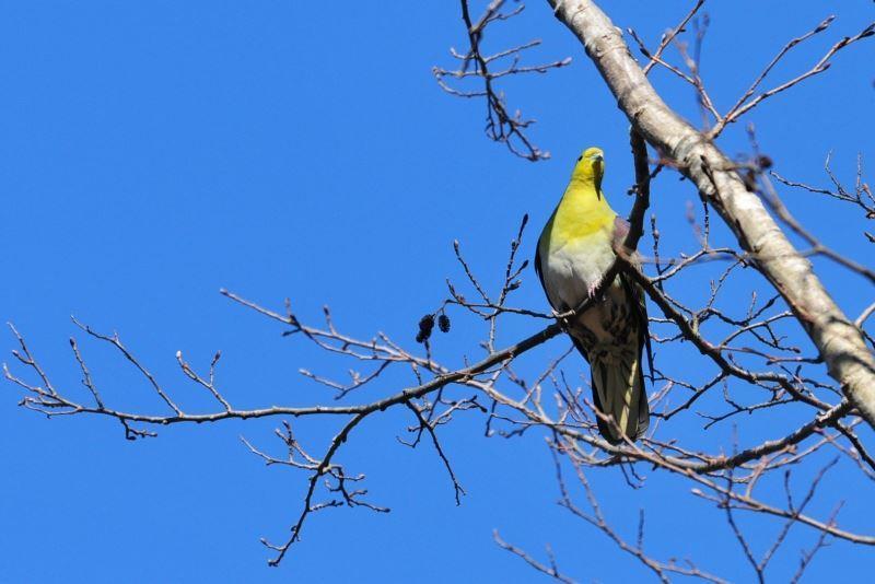 bird~b (1)